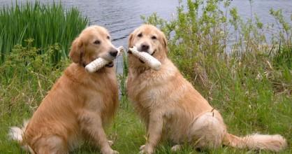 Dog patient